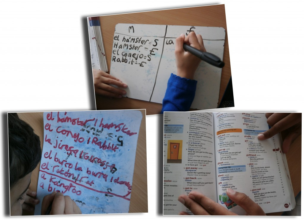 Year 3 using a dictionary to find animals